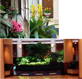 After The Plants Are Installed, Tropical Design, Inc. Provides Full  Maintenance With Guaranteed Replacements At No Additional Charge.